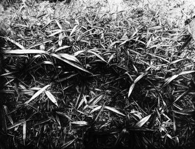 Lu Hui, 'New Bamboos 新竹', 2017