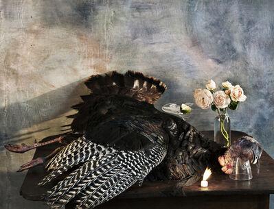Vera Mercer, 'Old wild  Turkey', 2012