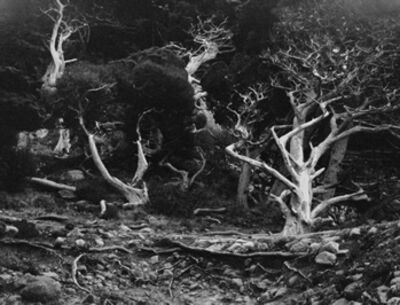 Edward Weston, 'Point Lobos', 1940