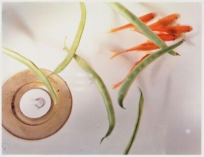 Jo Ann Callis, 'Goldfish and Stringbeans', 1980