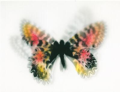 Stefania Ricci, 'Butterfly #10', 2013