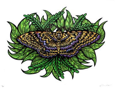 Dennis McNett, 'Black Witch Moth (Silkscreen Print)', 2016