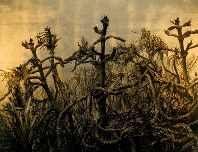 Aramasa Taku, 'HORIZON - Visible Transfiguration 2002', 2012