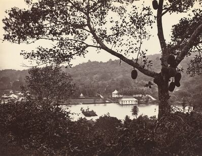 Samuel Bourne, 'A Peep from Upper Lake Road showing Temple and Island with Park -- fruit tree in foreground', ca. 1865