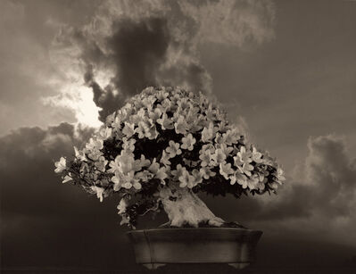 Yamamoto Masao, 'Bonsai #4031', 2019