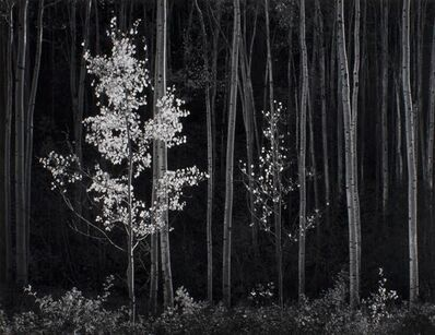 Ansel Adams, 'Aspens, Northern New Mexico ', 1958