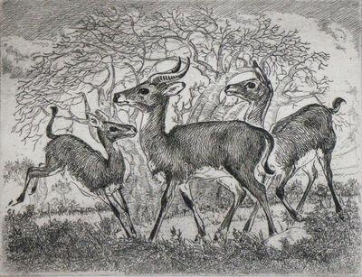 Waldo Park Midgley, 'Gazelles', ca. 1950