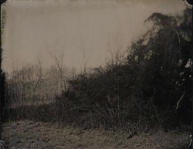 Robert Alexander Williams, 'Brambles', 2011