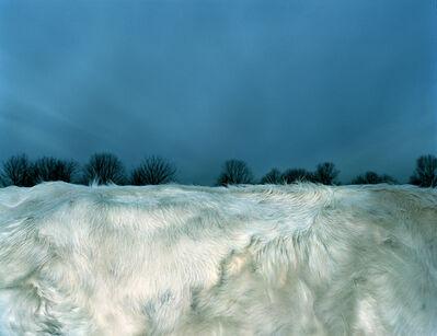 Leon Steele, 'Snow Pelage', 2002