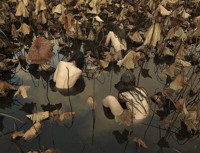 Tamara Dean, 'Sacred lotus ( Nelumbo nucifera) in Autumn', 2017