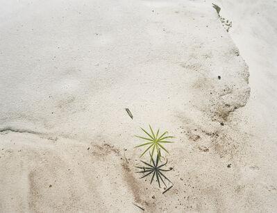 Sanna Kannisto, 'Palm Seedling on Deforestation area', 1998/2020