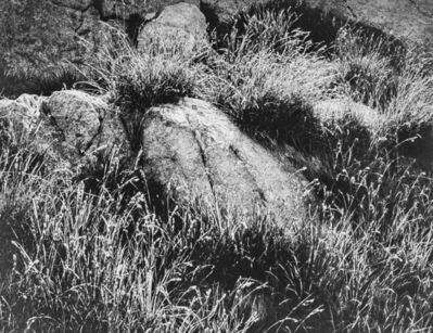 Ansel Adams, 'Rocks and Grass in Kings River Sierra', 1939