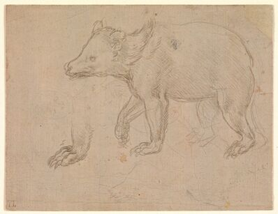 Leonardo da Vinci, 'A Bear Walking', ca. 1482–1485