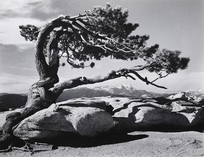 Ansel Adams, 'Jeffrey Pine, Sentinel Dome, Yosemite, 1940', 1940