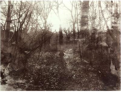 Danny Augustine, 'Queens Wood 1.10', 2016