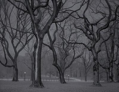 Michael Massaia, 'The Mall - 4am - Deep In A Dream - Central Park', 2013