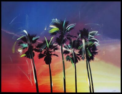 Pete Kasprzak, 'California Multi Palms', 2019