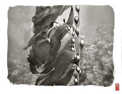 Ryuijie, 'Kelp and Bulbs', 2013