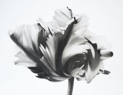 Jonathan Delafield Cook, 'Tulip ', 2021