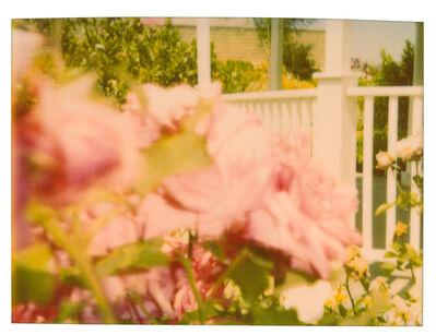 Stefanie Schneider, 'Rosegarden #04', 2004