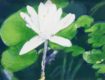 Joseph Raffael, 'Winter Moon Lily'
