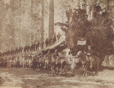 Howard Clinton Tibbitts, 'The Fall of the Monarch with Troop F, Sixth Cavalry, United States Army, Mariposa Big Tree Grove, Southern Pacific Company', 1899