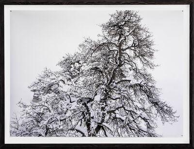 Hubertus Hamm, 'Winterbaum No. 16, V1', 2015