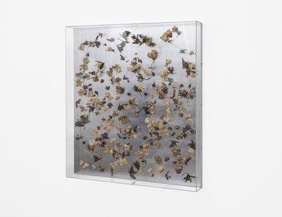Pierre Vermeulen, 'Dried orchid box, no. 1', 2018
