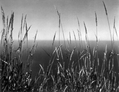Edward Weston, 'Grass Against Sea', 1937