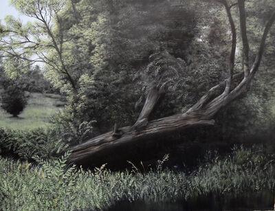 Eileen Murphy, 'Fallen', 2016