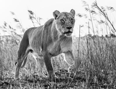 David Yarrow, 'The Green Green Grass of Home', 2016