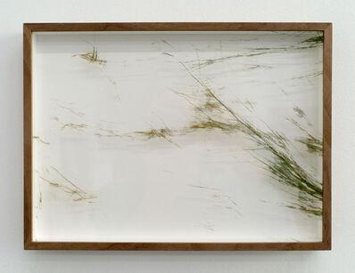 Adrien Missika, 'Botanical Frottage - Joana (Oaxaca series)', 2017