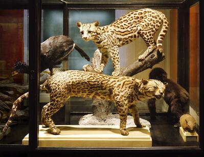 Anett Stuth, 'Object: Leopards ', 2004/21