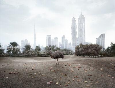 Richard Allenby-Pratt, 'Emu', 2011