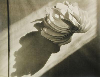John Vanderpant, 'Cactus Collaratus (variant)', 1931