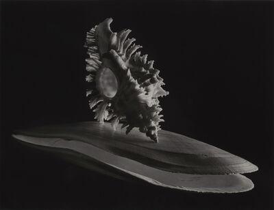 Ruth Bernhard, 'Branched Murex, Deep Sea Scallop', 1943