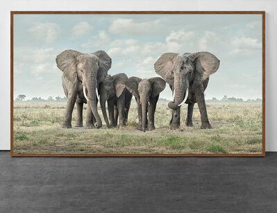 David Burdeny, 'Solice, Amboseli, Kenya, Africa', 2019