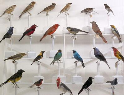 Cristina Kahlo, 'Pájaros en diálogo', 2018