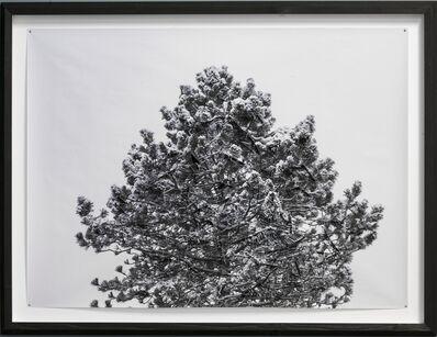 Hubertus Hamm, 'Winter / No. 03', 2014