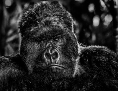 David Yarrow, 'The Governor', 2019