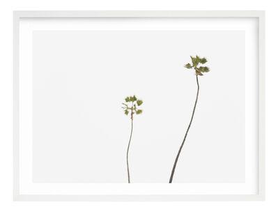 JP Greenwood, 'Palms', 2018
