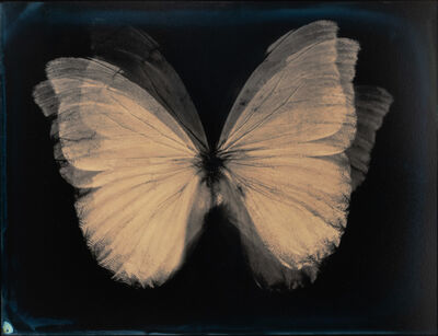 Lara Porzak, 'Butterfly Effect', 2015