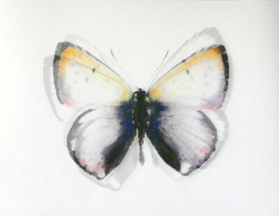 Stefania Ricci, 'Butterfly 085', 2019