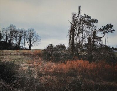 William Christenberry, 'Winter View of Kudzu, near Akron, Alabama, 1981', 1978-1981