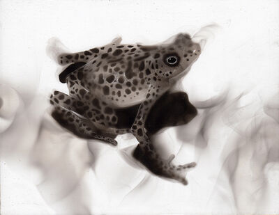 Steven Spazuk, 'Toad', 2020