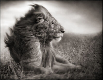 Nick Brandt, 'Lion Before Storm II', 2006
