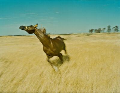 Marco Walker, 'Arabian Stallion', 2016