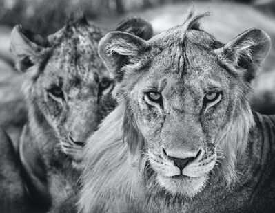 David Yarrow, 'The Boys Are Back In Town ', 2019