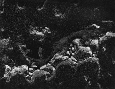 Wynn Bullock, 'Untitled', 1969-printed 1970 or before