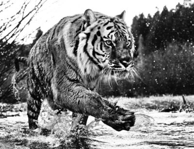 David Yarrow, 'Mystic River '